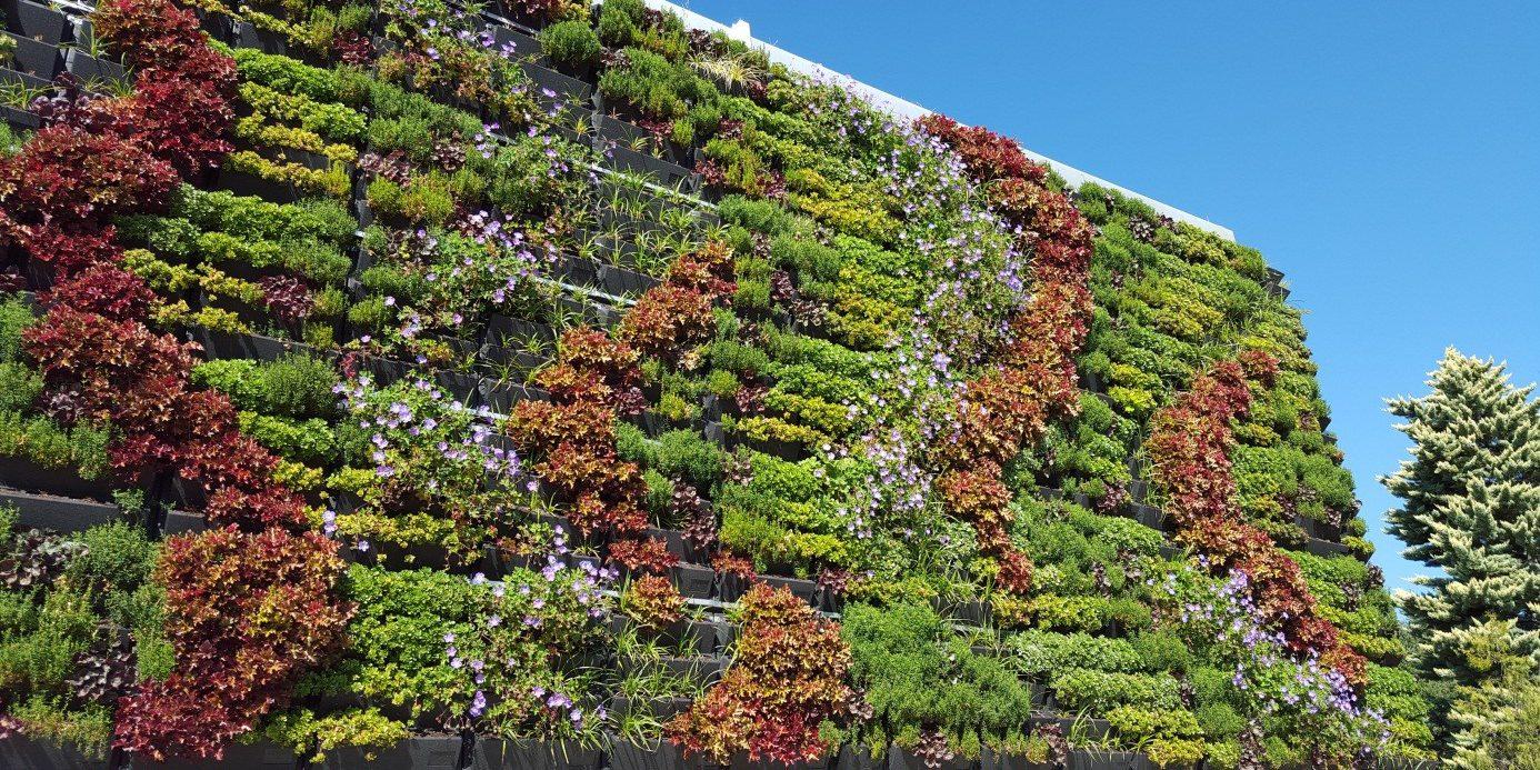 Mur végétalisé extérieur Genève - Suisse