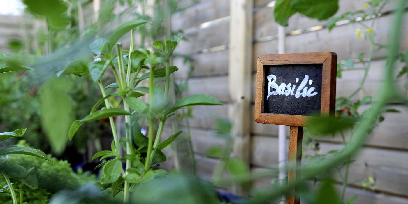 Potager de jardin Genève