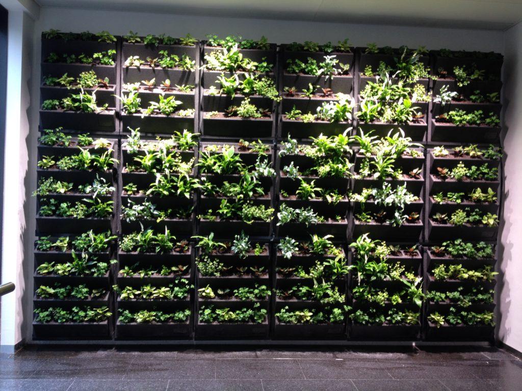 Mur végétalisé Lausanne